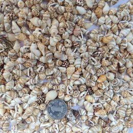 Wholesale Natural Art Materials - Wholesale- 50pcs Lot 0.9-1.5 cm Small Miscellaneous Conch Home Decoration Material Natural Craft Seashell Aquarium Fish Tank Landscape