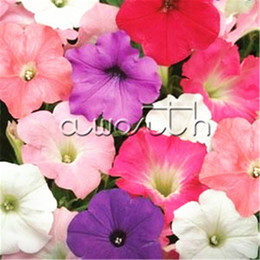 Wholesale Petunia Seeds - Petunia Mix Color 500 Seeds Super easy to grow from Seeds Popular flowers for Garden Container Balcony Landscape