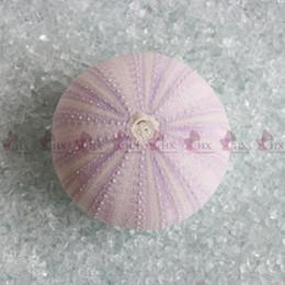 Wholesale Beach Dreams - Free Shipping(6pcs lot)Natural Dream Purple Sea Urchin Natural Shell Conch Beach Wedding Decoration Coastal Home Decoration