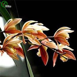 Piantagioni per orchidee online-Strani semi cinesi di orchidee da vaso Fioriere da vaso Fioriere da giardino Semi di fiori bonsai 20 Particelle / lotto u019