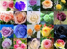 Wholesale Rose Garden Colors - Free Shipping 2016 Rose Seeds Attract 24 Colors 80 Pieces Seeds Per Package Home Garden Seeds Flowers HY1156