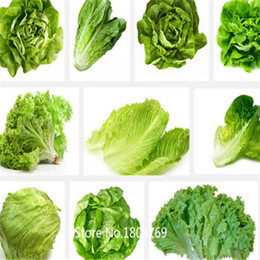 Semi d'inverno online-Vegetable Seeds- Winter Lettuce Collection 100 semi T032