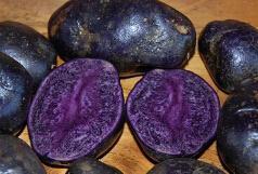 Wholesale Gardening Goods - 200pcs a set Potato, Purple Majesty Deep purple Seeds ddd HOME GARDEN DIY GOOD GIFT FOR YOUR FRIEND Please cherish it