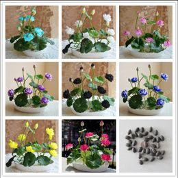 Wholesale Wholesale Hydroponic Supplies - 100pcs Bowl Lotus Seed Hydroponic Plants Aquatic Plants Flower Pot lotus Water Lily Seeds Bonsai Home Garden, Garden Supplies