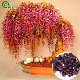 2019 semi di glicine Bonsai fiore Semi di glicine Pianta in vaso Colore misto Semi di fiori da giardino O023 semi di glicine economici