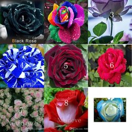 Wholesale Paper For Chinese Decorations - Colors Rose Rose Seed 10 Colors 100 Seeds Per Package Flower Seeds Home Garden Grow For Decoration