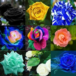 Wholesale Cheap Chinese Wedding Decorations - 2016 Cheap Wedding Rose Seeds Popular Yellow Garden Seeds 100 Piece Per Package Free Shipping Home Decoration