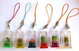 Wholesale Funny Plastic Bags - Funny Pet Plant Mini Plant Fancy Pet Tree Cell Phone Strap Bag Accessories