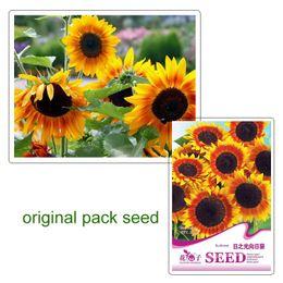 Wholesale Wholesale Sunflowers Seed - 1 original pack 20 pcs Japan Sunflower Helianthus Annuus Flower Seeds balcony plants free free shipping