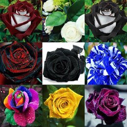 Wholesale Rose Cheap Wholesale - 2016 Cheap Rose Seeds Popular 10 Different Colors Garden Seeds 100 Piece Per Package Free Shipping