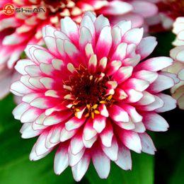 Yeni Varış 24 Renkler Zinnia Tohumları Çok Yıllık Çiçekli Bitkiler Saksı Büyüleyici Çin Çiçek Tohumları 100 Parçacıklar / lot nereden