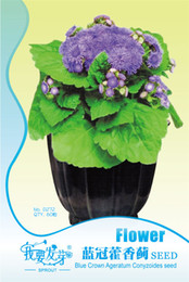 Wholesale Crown Gardens - The balcony garden flower seeds Blue crown ageratum thistle seeds red thistle A sweet 60   package3bags per lote