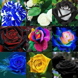 Wholesale Garden Ship - Magical 10 Colors Colorful 100 Rose Flower Seeds for your lover Home Garden Plant For Free Shipping