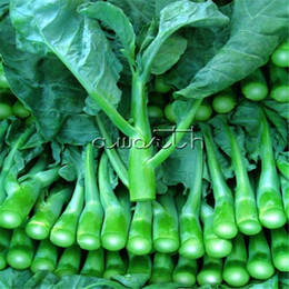 Semi di broccolo online-Gai Lan Chinese kale 200 Semi per piantare Spring Cabbage Chinese Broccoli Vegetable Easy-growing Heirloom Seeds Quick Harvest