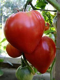 Semi Beefsteak Tomato Volove Sertse Chervonyy - Tori Cuore Heirloom rosso 100 pezzi S050 supplier heart seeds da semi di cuore fornitori