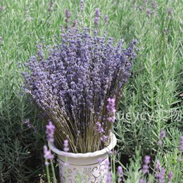Wholesale Dried lavender blue space dried lavender flowers blue flowers flower dry living space