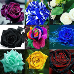 Wholesale New Beautiful Flowers - Colorful Beautiful Seeds *100 Pieces Seeds Per Package* New Arrival Two Colors Ombre Graceful Beautiful Garden Plants Fast Shipping