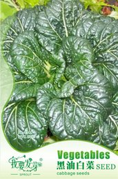 Wholesale Vegetable seeds Black oil cabbage seeds Rape Chinese cabbage balcony garden pot package