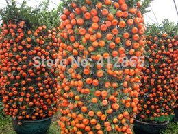 Wholesale Flowers Seeds - 30 Pieces  Bag Top Selling High Quality Bonsai Sweet Orange Tree Seeds Organic Fruit Tree Seeds Free Shipping For Home Garden 3bags per lot