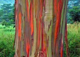 2019 rari fiori esotici 500 Semi di eucalipto deglupta, albero arcobaleno Albero raro semi Albero raro Spedizione gratuita