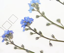 Wholesale Small Glass Flower - Raw Material Small Dried Blue Flowers   Do Not Forget Me Flowers For Glass Decoration 120 Pcs Wholesales
