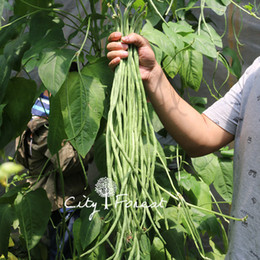 piante di ortaggi comuni Sconti Yard Long Bean Chinese Noodle Fagioli semi di ortaggi 50 Pz / borsa facile da coltivare Heirloom semi di ortaggi ad alto rendimento