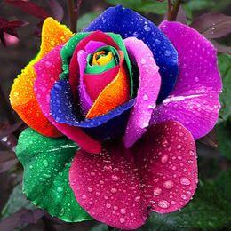 2019 il giardinaggio coltiva il sacchetto all'ingrosso 100 pezzi Holland Rainbow Rose Flower Home Garden Semi di fiori rari Semi di rose colorate