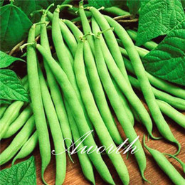 Semi di cespuglio online-Green Bean Vegetable 50 Seeds / Lot Green Bush Beans Fagioli rampicanti Facile da coltivare Heirloom Seed Vegetable Very Tasty
