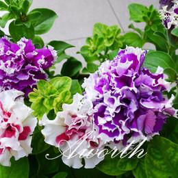 flor de petunia doble 100 pc semillas bolsa mezcla de color flor de jardn ideal para camas de flores cestas y bonsai