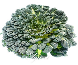 Black Dwarf Chinese Cabbage Semi di ortaggi Asian Green Tatsoi 500 pezzi Easy-growing Non-Gmo Vegetable for Autumn Winter Harvest da