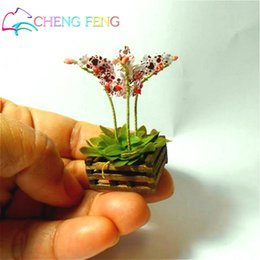 Wholesale Mini Flower Pots Wholesale - 100 Pcs Seeds Mini Bonsai Orchid Seeds Indoor Home Miniature Flower Pot Garden Plants Four Seasons Beauty 2016 Rare Flowers Gift