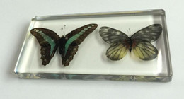 Wholesale Butterfly Specimens - free shipping Yqtdmy Acrylic Resin Embedded Real Butterfly Specimen Transparent Insect Learning&Education cool insect 0001