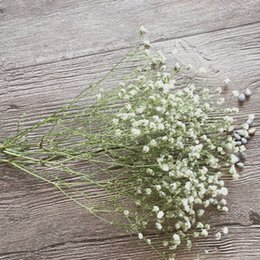 Wholesale Party Babys - Dried Flower Wall Decor White Babys Breath For Holidays and Party Ornament 1 Branch