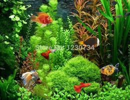 Confezione di 22 varietà, 20g, semi di alghe, semi di acquario, semi di piante acquatiche, alto tasso di sopravvivenza superiore W52 da