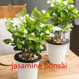 Wholesale Wholesale Jasmine Flowers - Jasmine Seeds Promotion Balcony Bonsai Flower Seeds Flowering Plants White Jasmine 20pcs Easy to grow T024