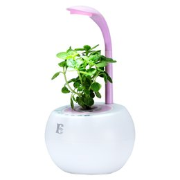 Wholesale Modern Painting Small - 2017 hot sale LED hydroponics plant desk lamp designed for indoor plant small sun light mini-garden good gift for the kids