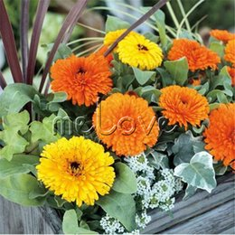 Wholesale marigolds flowers - Calendula Officinalis Mixed Color Flower 200 Seeds Pot Marigold Perfect Candidates Flower Landscape Easy- growing Showy Garden Balcony Plant