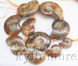 Wholesale 45mm Beads - 18-45MM Ammonite Fossil Beads 15.5''