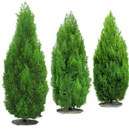Wholesale Popular Trees - 30 PCS Italian cypress (Cupressus tree seeds), popular family hardy bonsai garden seeds are planted afforestation tree seed