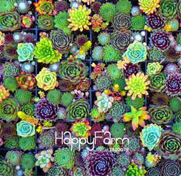semi di cactus Sconti 100 pezzi / borsa best-seller! Succulente semi di cactus loto lithops piante bonsai casa giardinaggio vasi da fiori balcone seme di fiore