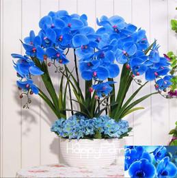 Wholesale Perennial Sales - hot sale ! Beautiful 9 Varieties Phalaenopsis Seeds Perennial Flowering Plants Potted Charming orchid Flowers Seeds orchid-seedlings