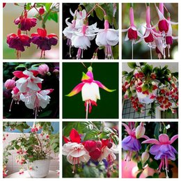 Wholesale Fuchsia Flower Seeds - 9 Kinds of Fuchsia Perennial Flower Seeds Can be Choose Potted Flowers DIY Planting Flowers Bell Flower Seeds - 100 PCS