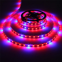 Sıcak satış led şeritler 5 M Led Bitki ışık büyümek 60led / m SMD5050 Topraksız Sistemleri Şerit Işık Büyümeye Yol Açtı 300 Leds lambaları Tam spektrum 660nm 460nm supplier dc grow lights nereden dc ışıkları büyür tedarikçiler