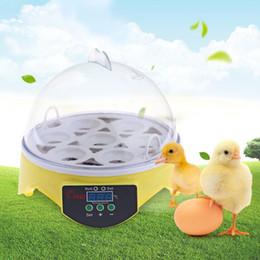 Wholesale Poultry Egg Incubators - 7PCS Eggs Automatic Poultry Mini Incubator Temperature Control Automatic Poultry Bird Pet Hatcher Chicken Hatcher Machine