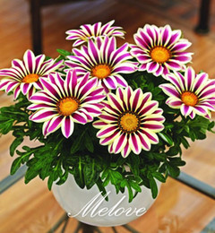 Wholesale Grow Homes - Gazania Flower Seeds 100 Pcs Treasure Flower Mix Color Easy-growing Perennial Plant for DIY Home Garden Bonsai Container Flower Bed etc