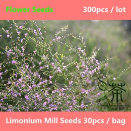 Wholesale Ornamental Plant Beautify Limonium Mill Seeds Landscaping Qing Ren Cao Flower Seeds Aromatic Plant Plumbaginaceae Seeds