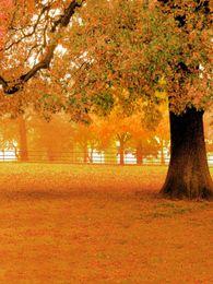 im freien szenische kulissen Rabatt Herbst Scenic Fotografie Hintergrund Vinyl Tuch großen Baum Orange Blätter Boden Herbst Hintergrund Outdoor Hochzeit Kulissen 8x10ft
