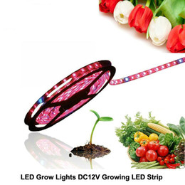 Wholesale Rohs Greenhouse Led - Grow Lights LED Strip DC12V Red Blue Growing LED Strip 5050 for Greenhouse Hydroponic Plant 5m lot