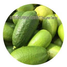 Wholesale Citrus Seeds - 50pcs a set UNITED STATES PERFUME LEMON FRUIT Citrus Limon Tree Seed Hot Seed Great Quality Great Service Great Price