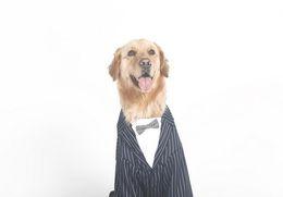 Wholesale 3xl Dog Clothing - Large Dog Clothes Big Dogs Coat Stripes Bowknot Tuxedo Wedding Suit For Retriever Husky 3XL-7XL